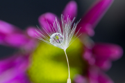 Purple-yellow-refraction-©Lauri-Novak